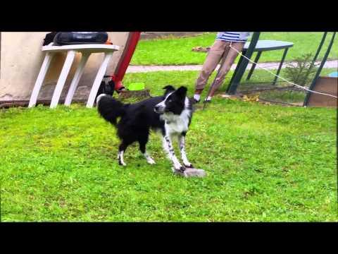 Amazing Dog Dancing Show - Irena Ištvánková + LAYLA
