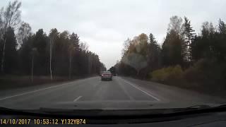 Стадо оленей на дороге