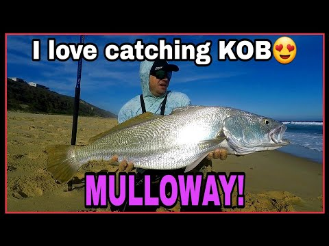 FINDING KOB/MULLOWAY! SEARCHING For EDIBLE FISH!!!  EXPLORING New Fishing Grounds! Bait Demo! ZLF