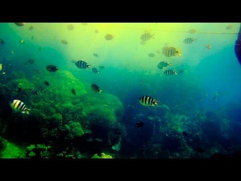 """帛琉Palau水底天堂60sec Paradise Under Water """"(水母湖.大斷層.牛奶湖.鯊魚城.藍角.藍洞.鯨魚島)"""