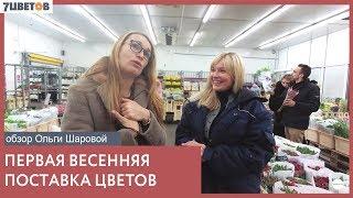 Мартовская поставка срезанных цветов / Обзор Ольги Шаровой