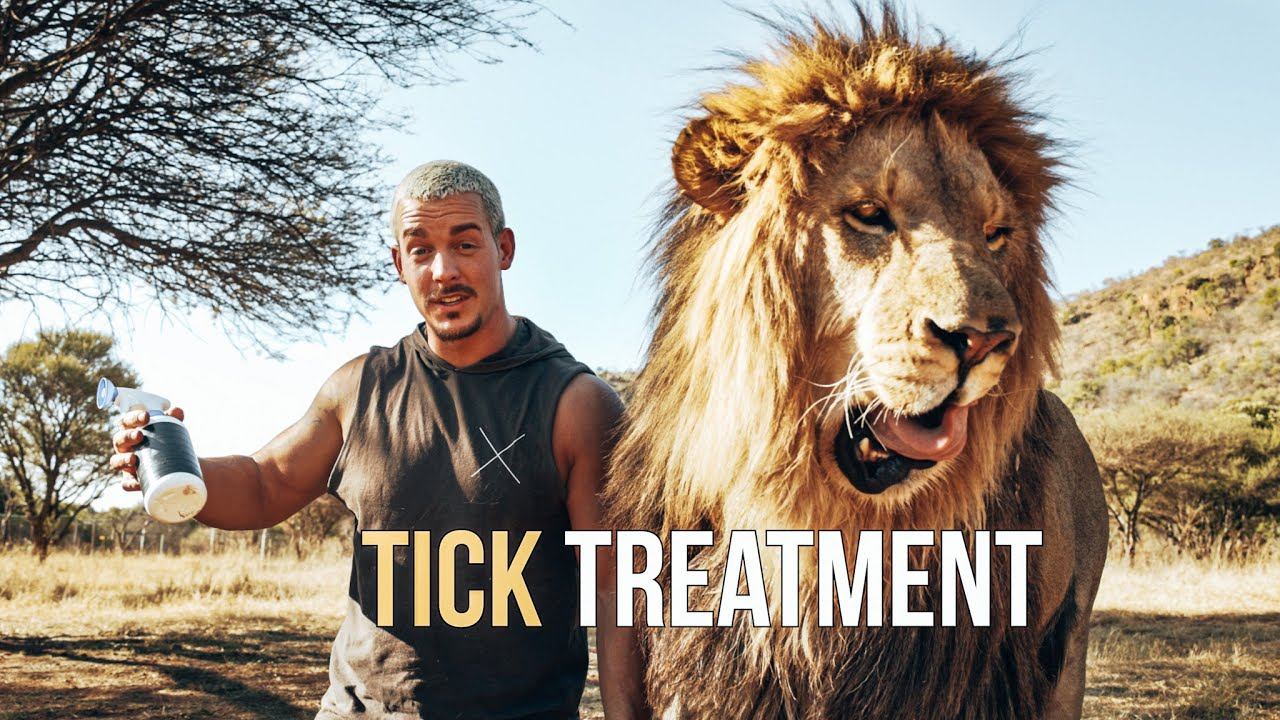 Tick Treatment for the Lions - Dean Schneider