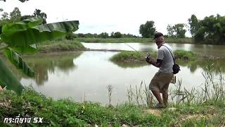 Fishing in Thailand River !!! How to fishing Gianit fish ! របៀបស្ទូចត្រី