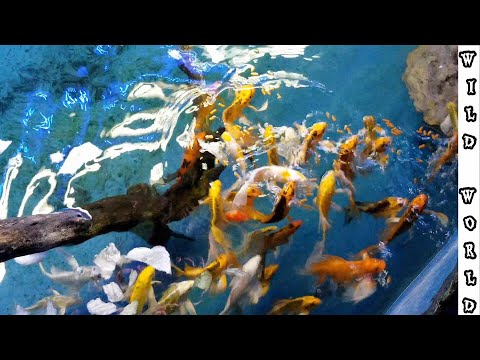 Exotic TROPICAL Fish Store Tour *New Pet*