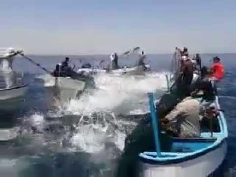 Рыба перевернула лодку видео