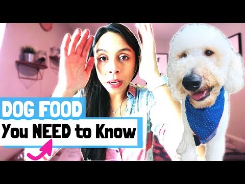BEST DOG FOOD // What To Look For In Raw Dog Food