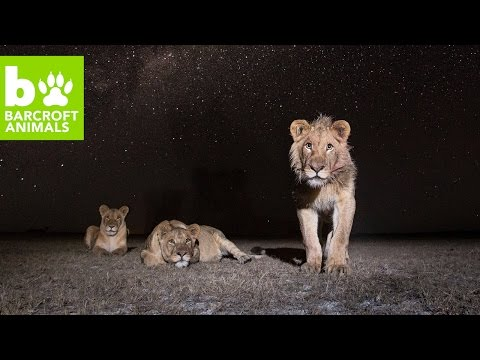 SNAPPED! Wildlife Photographer Uncovers Africa's Nightlife