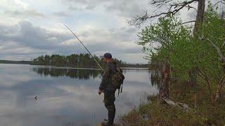 Рыбалка на таёжном озере Ловлю плотву и окуня на удочку в тайге Рыбалка на поплавочную удочку