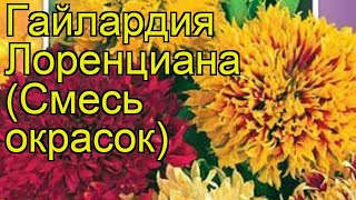 Гайлардия Лоренциана (Смесь окрасок). Краткий обзор, описание характеристик, где купить семена