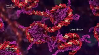 Процесс работы ДНК и РНК в нашем организме