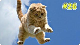 Смешное Видео С Кошками 2016! Самое Лучшее! Кошачьи Приколы (#26)