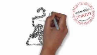 Картинки кошек нарисованные  Как нарисовать обгрызанную черную кошку с голубыми глазами карандашом з