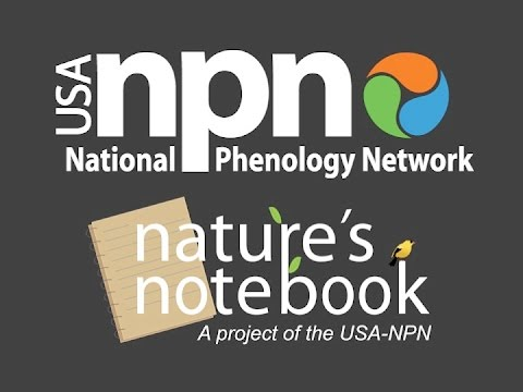 Engaging Volunteers in the Nature's Notebook Citizen Science Program
