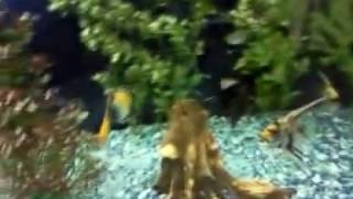 Искусственные аквариумные растения