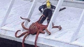 5 Причин бояться осьминогов