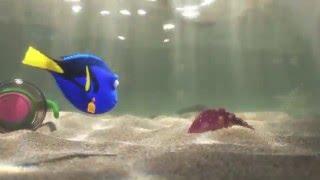 Kijk Finding Dory Trailer filmpje