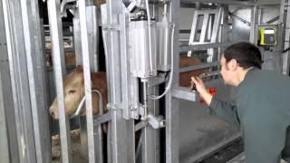 Options lève-tête et anti-recul Pneumatiques sur Cage de pesage suspendu PM 2800