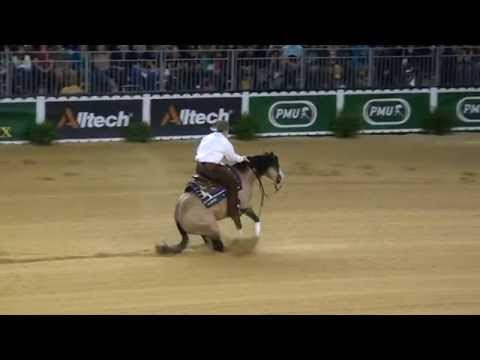 HF Mobster Individual Run at the 2014 World Equestrian Games in Normandy, France