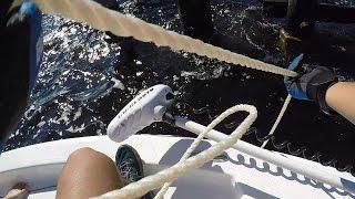 350 Lb Goliath Grouper Caught on a Handline! (Boca Grande 10/6/15)
