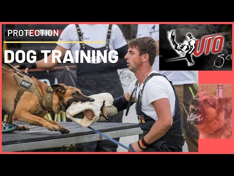 How To Train A Dog To Bite A Training Sleeve ? Seminars For Training Dogs With Viorel Scinteie !!!