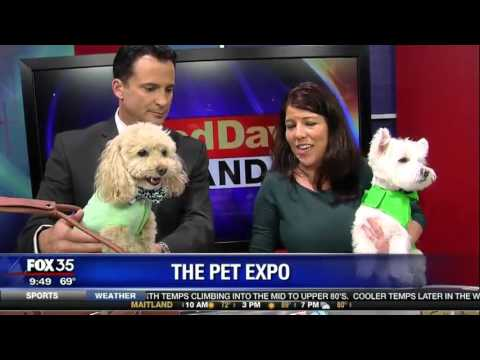 """Eco-Friendly Pet Products & St Patrick's Day Safety Tips with """"The Pet Lady"""" on Good Day Orlando!"""
