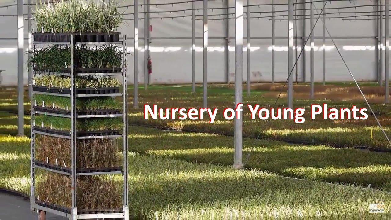 Nursery Of Young Plants 31 416 69 21