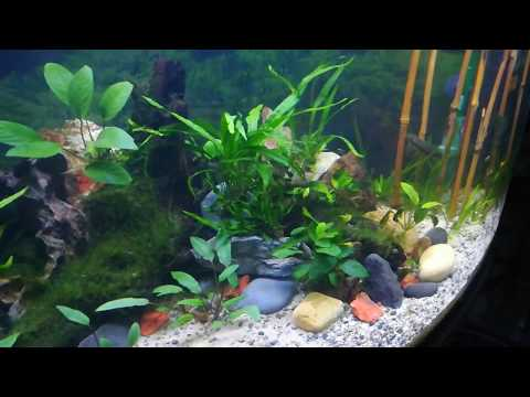 Freshwater 150L new layout with Eheim/JBL filters