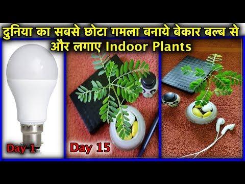 घर में इंडोर प्लांट लगाने का शानदार तरीका बिल्कुल फ्री l Grow Indoor Plants At home free of cost - 동영상