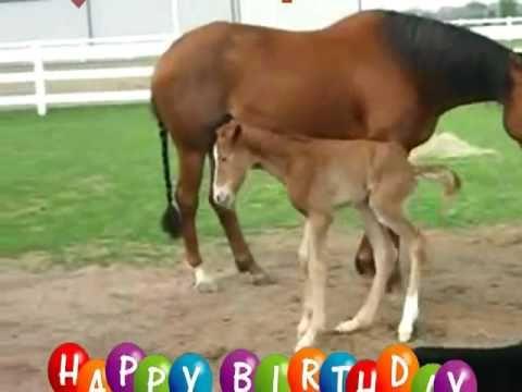Happy Birthday Horse Style Youtube