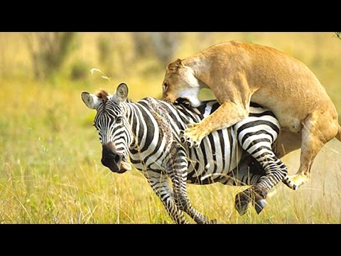 10 Amazing Animal Predators
