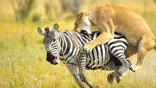10 Amazing Animal Predators - Alltime10s