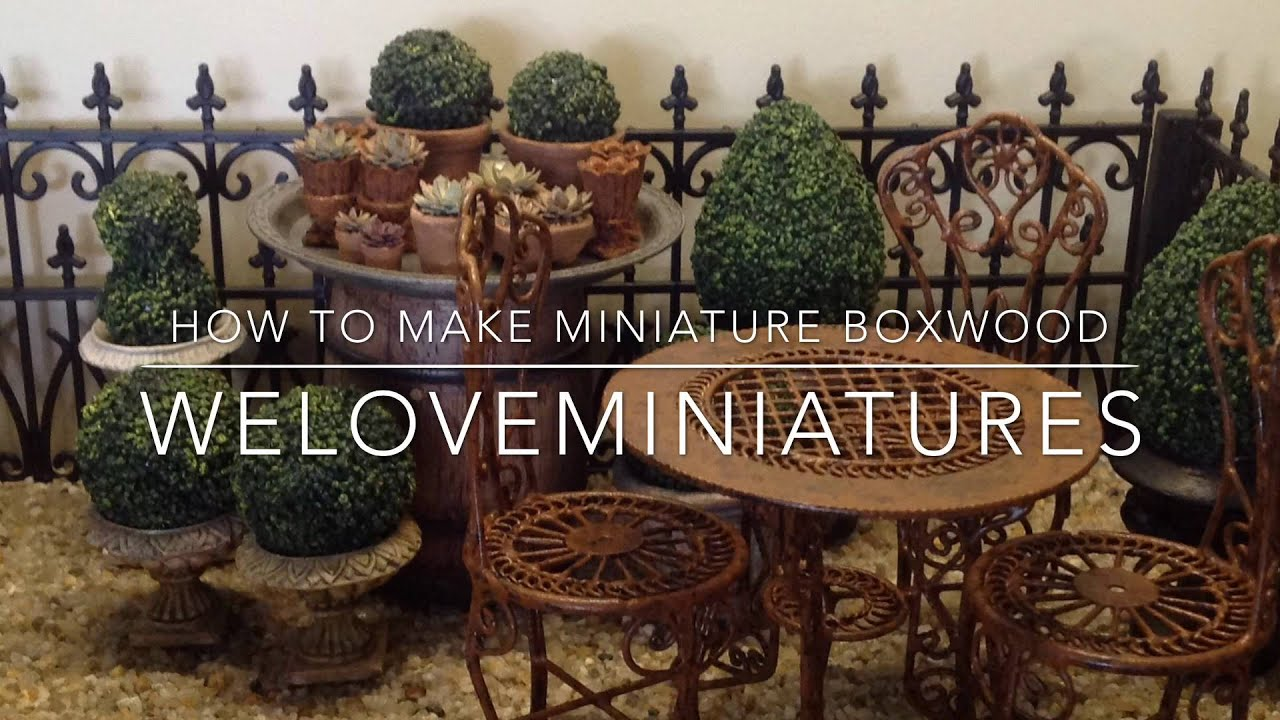 How to make miniature boxwood