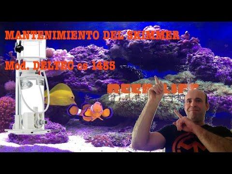 Acuario Marino de Arrecife 300 Lts con panel de 120 LEDs HP 1w (8 meses de montado)из YouTube · Длительность: 3 мин48 с