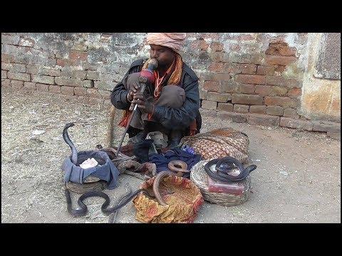 Nepal Ka Madari India Ka Sanp ll Street Performer & Cobra Snake Show.