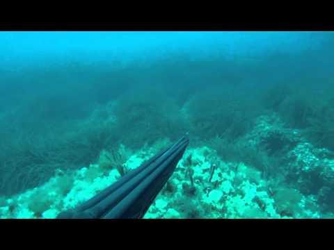 Podvodni ribolov - kavala