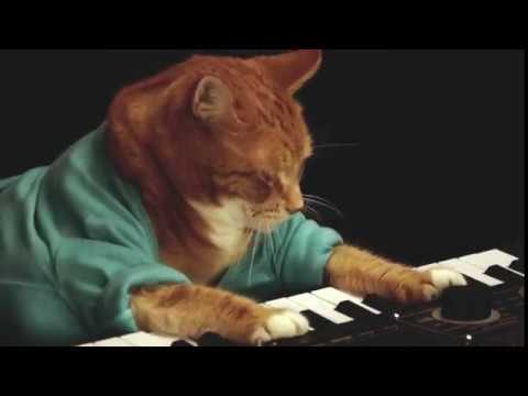 Keyboard Cat Is Dead, But This Tribute Video from His Owner Does Him Justice