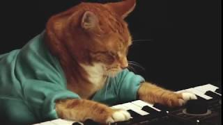 Keyboard Cat, Bento, A Tribute