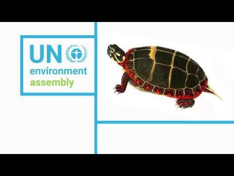 UN Environment Assembly 3: Minister Gutiérrez, Costa Rica