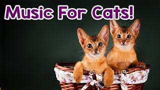 Cat Music 15 Hours! Help Calm Your Kitten Down! Relaxing Music for this Stressed Cats!