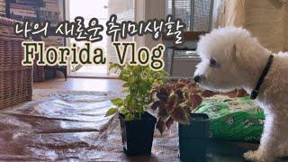 미국일상수줍은 나의 정원 '새로운 취미' 식물키우기