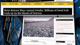 millions of dead fishes washed up disappeared on shores jan 3 2012 signs of times prediction
