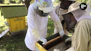 Kā Talsu pusē ievāc Medņu medu