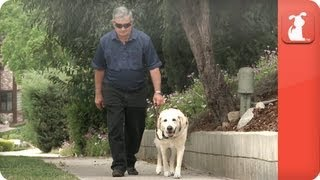 Man gets back independence with Guide Dog - Healing Power of Pets