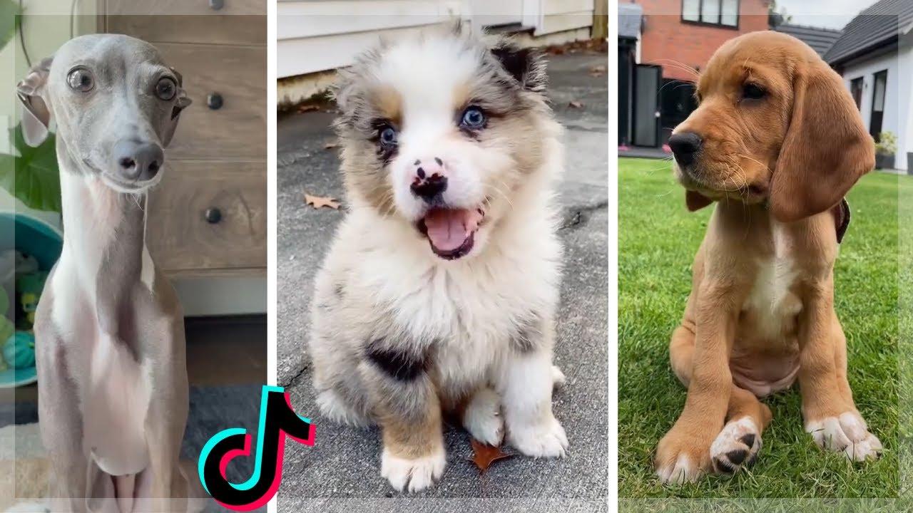Dog Memes That Make You Want A Dog Immediately 🥰