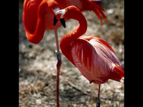 Amazing Flamingos!