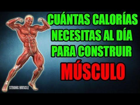 cuantas calorias necesitas para construir musculo