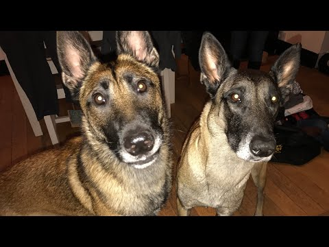 Dog to dog greetings