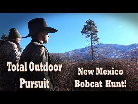 Bobcat Hunt With Hounds In New Mexico Mountains! Dog Hunting