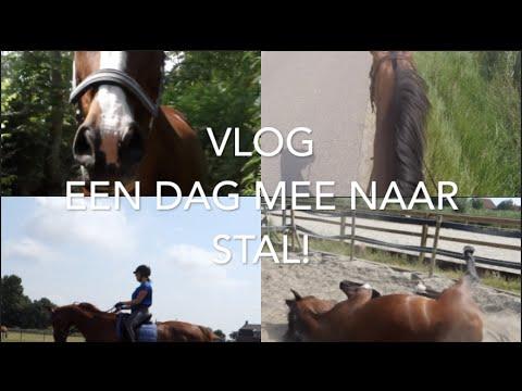 VLOG: DAGJE MEE NAAR STAL! | Romy Oudshoorn