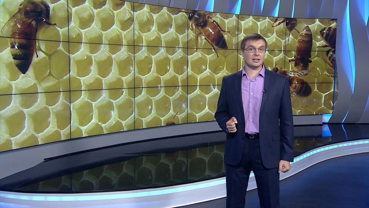 Компания «мёд оптом» в г. Борисоглебск, воронежской области, осуществляет закупку мёда, от пчеловодов. Оплата сразу!. Цена договорная зависит от объема и расстояния до вас. Оплата наличными в день поставки. Звоните узнавайте!. Возможен самовывоз из воронежской, саратовской,